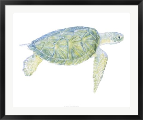 Framed Tranquil Sea Turtle I Print