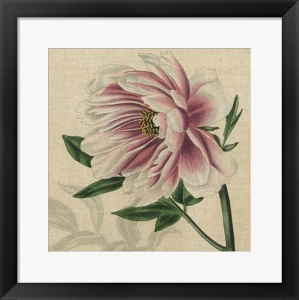 Framed Floral Delight II Print