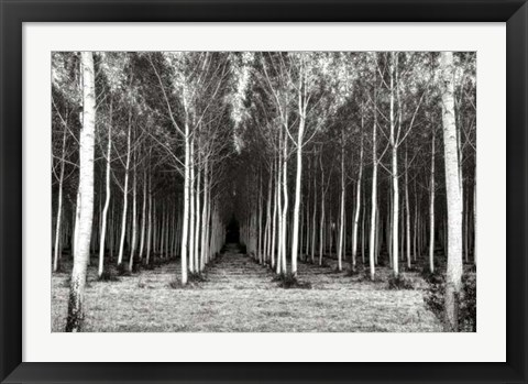 Framed Alley At Lac D'uby Print