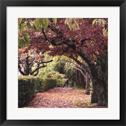 Framed Arch of Trees Print