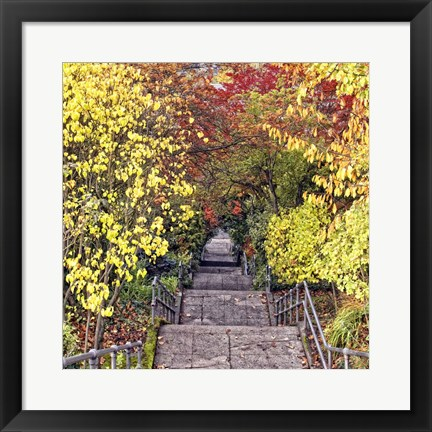 Framed Autumn Tunnel Print