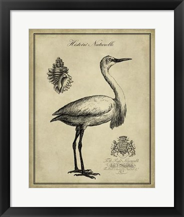 Framed Antiquarian Egret Print