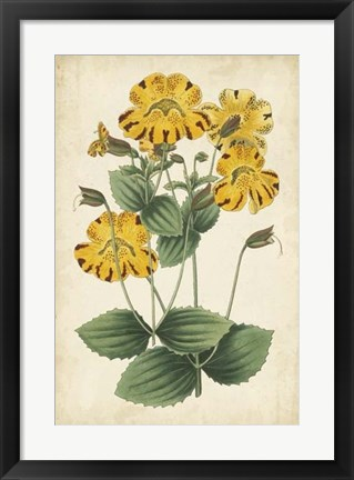 Framed Botanical Display I Print