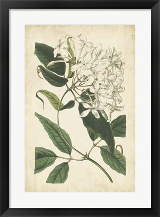 Framed Botanical Display II Print