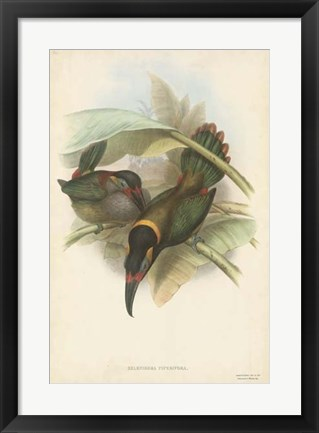 Framed Tropical Toucans VI Print