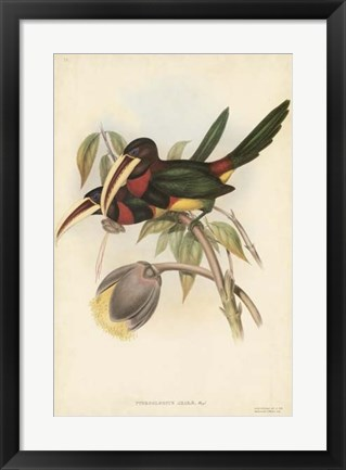 Framed Tropical Toucans VIII Print