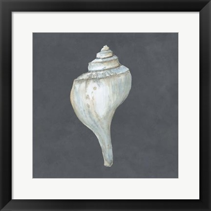 Framed Shell on Slate IV Print
