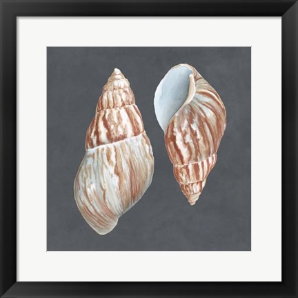 Framed Shell on Slate V Print