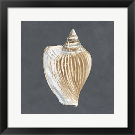 Framed Shell on Slate VI Print