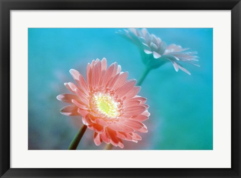 Framed Close up of pink and lavender flowers Print