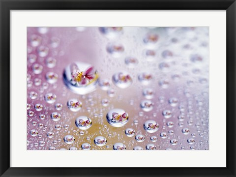Framed Close up of water droplets with flower reflected in centers Print