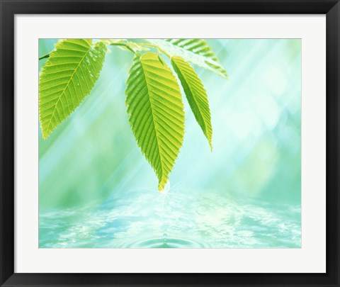 Framed Selective focus close up of green leaves above water ripples in blue Print