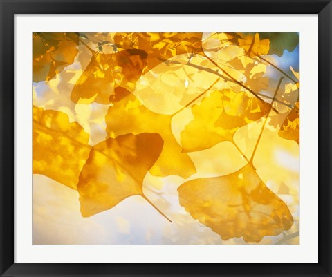 Framed Selective focus close up of golden yellow autumn leaves Print