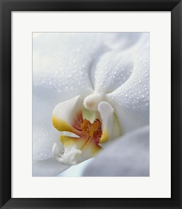Framed Close up of center of white orchid with yellow center Print