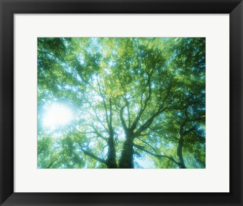 Framed Selective focus trees in forest Print