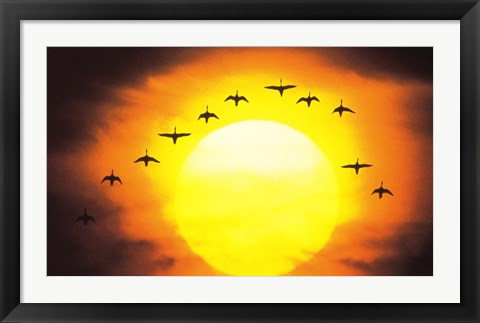 Framed Silhouetted Birds in Sunset Print