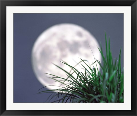 Framed Grass blades With Full Moon in Background Print