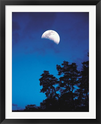 Framed Half-Moon over Trees in Dark Print