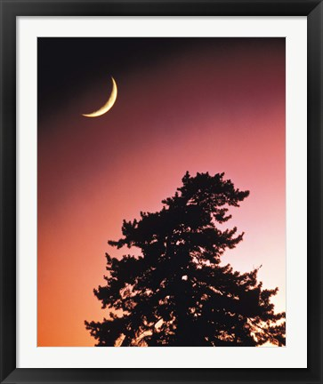 Framed Crescent Moon over Trees in Front Of Dark Red Sky Print