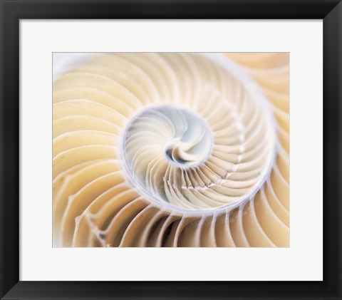 Framed Close up of shell Print