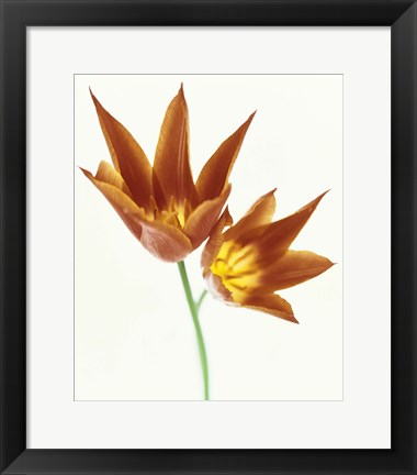 Framed Close up of flowers Print