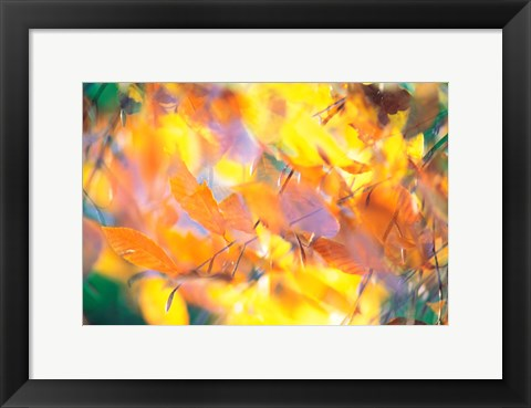 Framed Fallen Leaves on Ground with Backlit, Autumn Print