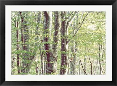 Framed Forest in Spring Print