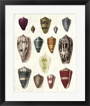 Framed Colorful Shell Assortment I Print