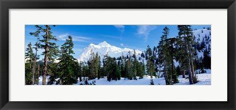 Framed Trees on a snow covered mountain, Mt Shuksan, Mt Baker-Snoqualmie National Forest, Washington State, USA Print