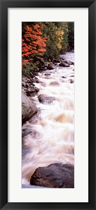 Framed River flowing through a forest, Ausable River, Adirondack Mountains, Wilmington, New York State (vertical) Print