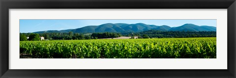 Framed Vineyards along D27, Vaugines, Vaucluse, Provence-Alpes-Cote d'Azur, France Print