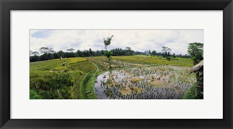 Framed Farmers working in a rice field, Bali, Indonesia Print