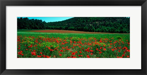 Framed Poppies in a field, Provence-Alpes-Cote d'Azur, France Print