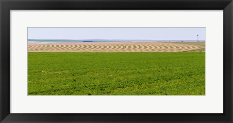 Framed Harvested alfalfa field patterns, Oklahoma, USA Print