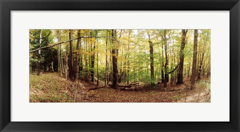 Framed Forest, Kaaterskill Falls area, Catskill Mountains, New York State Print