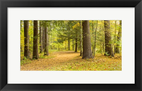 Framed Forest in autumn, New York State, USA Print