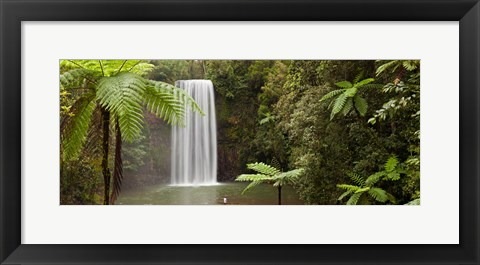 Framed Waterfall in a forest, Millaa Millaa Falls, Atherton Tableland, Queensland, Australia Print