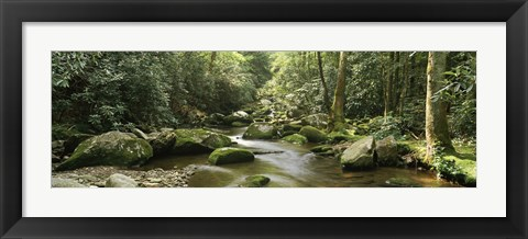 Framed Roaring Fork River flowing through forest, Roaring Fork Motor Nature Trail, Great Smoky Mountains National Park, Tennessee, USA Print