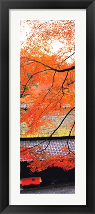 Framed Autumn Colors, Sagano Kyoto Japan Print