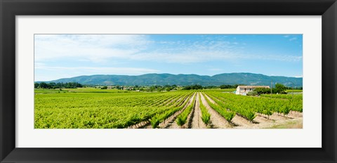 Framed Vineyard with mountain in the background, Ansouis, Vaucluse, Provence-Alpes-Cote d'Azur, France Print
