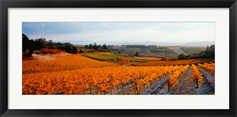 Framed Vineyards in the late afternoon autumn light, Provence-Alpes-Cote d'Azur, France Print