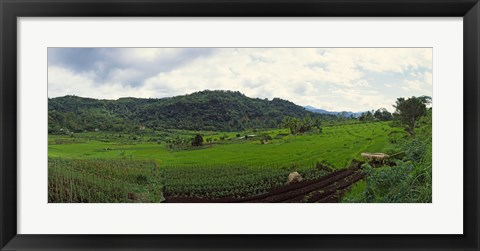 Framed Terraced rice field, Indonesia Print