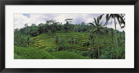 Framed Terraced rice field, Bali, Indonesia Print