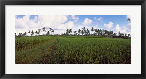 Framed Rice field, Bali, Indonesia Print