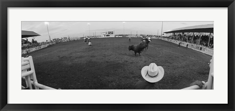 Framed Cowboy riding bull at rodeo arena, Pecos, Texas, USA Print