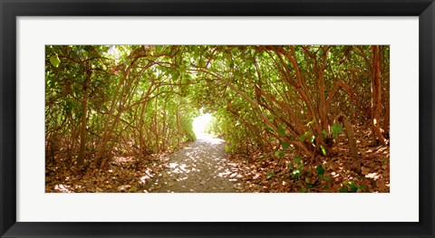 Framed Trees on the entrance of a beach, Delray Beach, Palm Beach County, Florida, USA Print