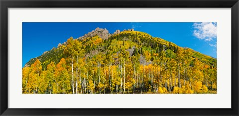 Framed Aspen trees on mountain, Ophir Pass, San Juan Mountains, Uncompahgre National Forest, Colorado, USA Print