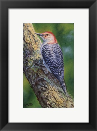 Framed Red Bellied Woodpecker Print