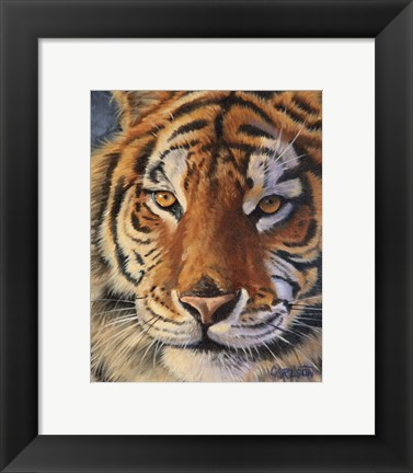 Framed Siberian Tiger - up close Print
