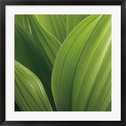 Framed Corn Lily Print